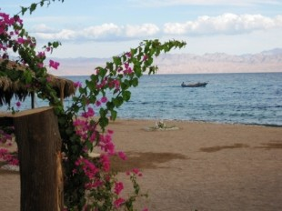 Sinai: Camp am Meer mit Bougainvillea